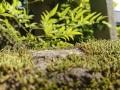 Sony Xperia XZ2 Premium sample photos