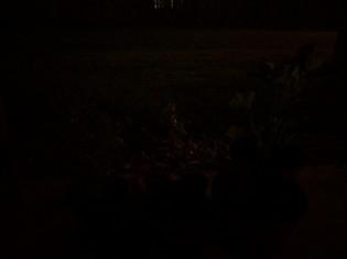 HDR+ Night Sight