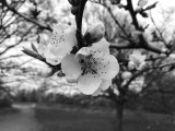 Honor 8 Pro 12MP monochrome camera samples - Honor 8 Pro review