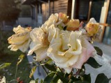 Main camera, 12MP - f/1.6, ISO 32, 1/1130s - Apple iPhone 12 Pro Max review