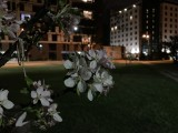 Apple iPhone SE (2020) 12MP low-light samples - f/1.8, ISO 500, 1/4s - Apple iPhone SE 2020 review