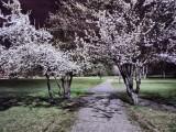 Realme 6 16MP Night Mode photos - f/1.8, ISO 8650, 1/14s - Realme 6 review
