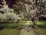 Realme 6i 8MP Night Mode photos - f/1.7, ISO 604, 1/50s - Realme 6i review