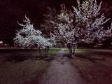 Realme 6i 8MP ultrawide Night Mode photos - f/2.2, ISO 1563, 1/25s - Realme 6i review