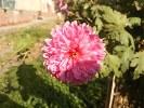 Samsung B7610 OmniaPRO camera sample