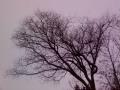 Photos taken with Sony Ericsson W890